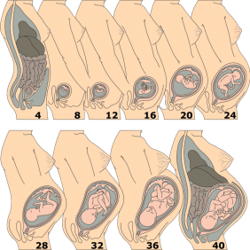 Tek Umblikal Arter (Bebeğin Kordonunda Tek Atardamar Bulunması)