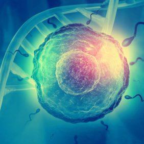 Hamilelik Döneminde Enginar Tüketimi Nasıl Olmalı?