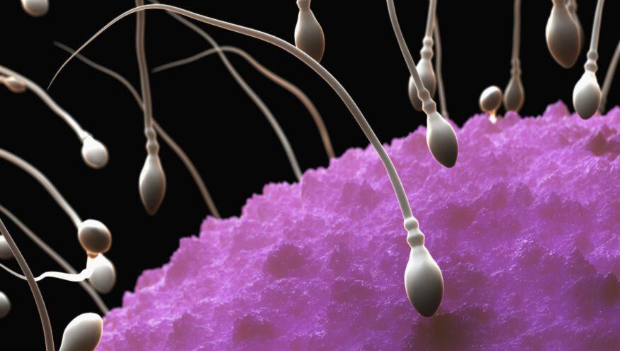 Sperm Sayısını Artıran Yiyecekler